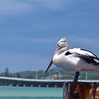 Pelican  by lib225