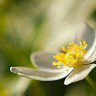 Fade Into Green White Flower by William Martin