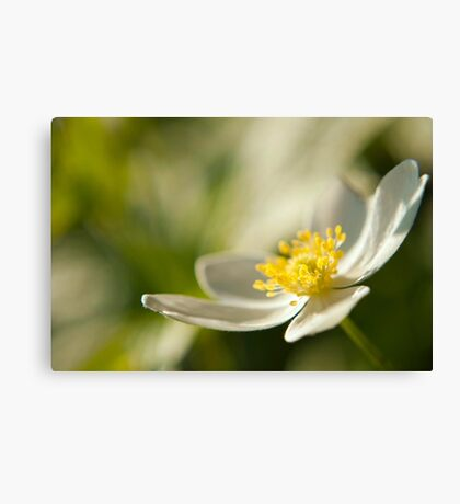 Fade Into Green White Flower Canvas Print