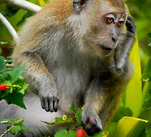 Monkey making a phone call by Andy Yeoh