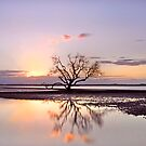 The Summer Tree - Victoria Pt Qld Australia by Beth  Wode