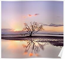 The Summer Tree - Victoria Pt Qld Australia Poster