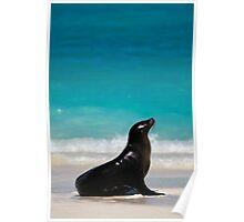 Galapagos Sea Lion, Gardiner Bay Poster