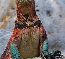 Espanola Marine Iguana, Punta Suarez, Galapagos by parischris