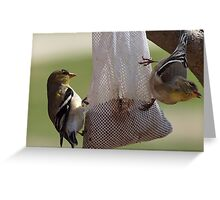 two finches Greeting Card