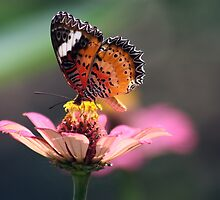 Butterfly on Flower by jweeks