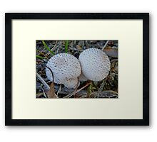 Ball Fungi Framed Print