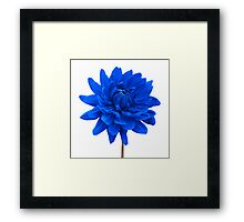Blue Dahlia Flower White Background Framed Print