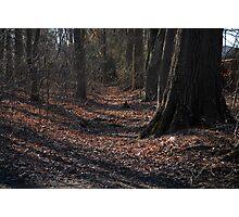path of shadows Photographic Print