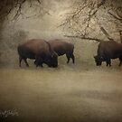 Bison by kristijohnson