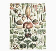 Autumn Fall Vegetables Vegetarian Vegan Thanksgiving Dictionary Organic Art Vintage Cottage Chic One Piece - Short Sleeve