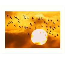Sunrise Brent Flock Art Print