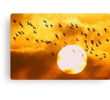 Sunrise Brent Flock Canvas Print