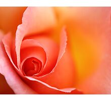 Romantic Red Orange Rose Wall Art Photographic Print