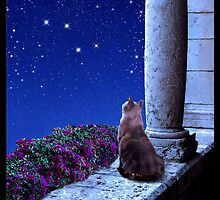 Cats and the Constellations Calendar  by Kathleen Horner