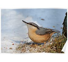 Nuthatch in the snow Poster