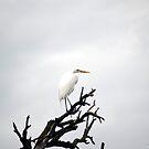 Heron on Dead Tree Branch by afroditi katsikis