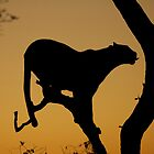 Morning Leopard silhouette by Jane Horton