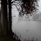 Fog and Cypress by WildestArt