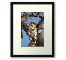 On the look out Framed Print