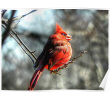 A Cardinal with Gluttony Problem Poster