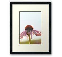 Daisy wanting to reach higher Framed Print
