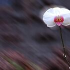 lonely orchid by designsalive