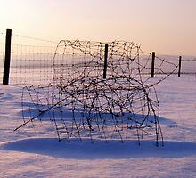 Winter Wire by mikebov