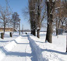 Snowy Road by branko stanic