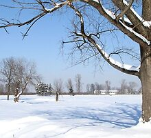 Tree in Snow by branko stanic