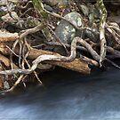 Mulgrave River Bank by Chris Cohen