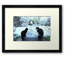 Cool for Cats Framed Print