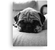 """""""Winston"""" in Dismay  Canvas Print"""