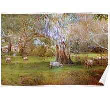 Grazing in the Green - Mount Pleasant, South Australia Poster