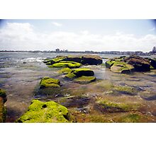 moss rocks  Photographic Print