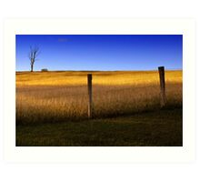 Dayboro - Fence and tree. Art Print
