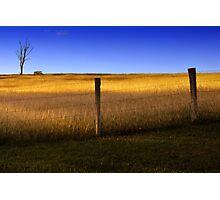 Dayboro - Fence and tree. Photographic Print
