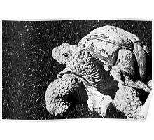 Stone Turtle Poster