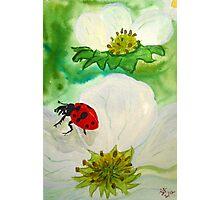 Strawberry Blossom Ladybug Photographic Print