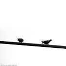 Doves on Streetlight by vanyahaheights