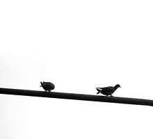 Doves on Streetlight by vanyahaheights
