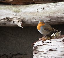 Robin by Ray Clarke