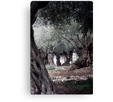 The Garden of Gethsemane, Jerusalem Canvas Print