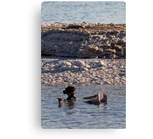 Dead Sea mud and salt crystals Canvas Print