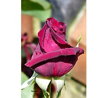 A Rose for Valentines Photographic Print