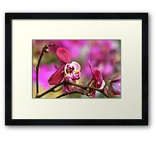 Orchids at the market Framed Print