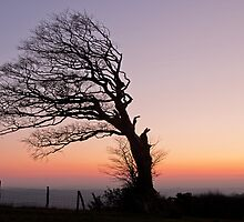 Half a tree on Raddon Top by peteton