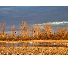 Sequoyah National Wildlife Refuge Photographic Print