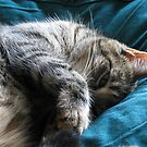 Cat Nap by Jan Morris