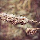 Frozen morning by Elda